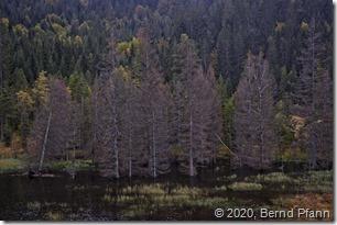 Wanderung auf dem Raimartiweg zum Feldsee im Schwarzwald